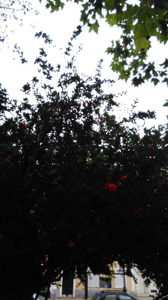 Maio florido